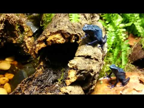 how to build a vivarium with waterfall