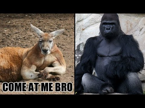 Who Do You Think Is Stronger?  Animals With Incredible Strength From Around The World