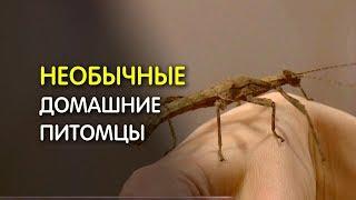 Необычные домашние питомцы: насекомые