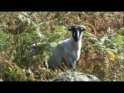 Two Monkey Dogs go from Brinscall to White Coppice & back.wmv