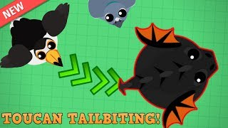 Mope.io Epic Toucan Tailbiting! New Toucan and Pigeon Birds! (Mope.io Beta Update)