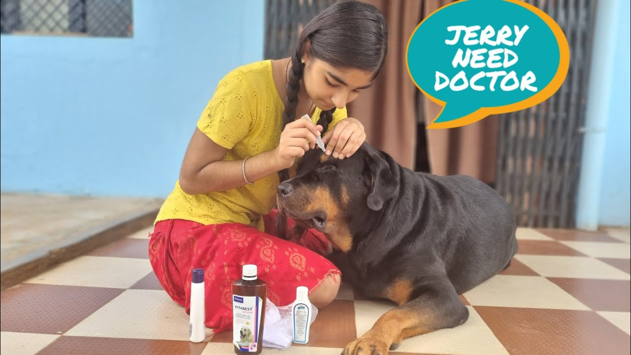 Jerry needs medical check up|| dog deworming