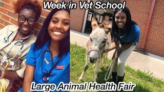 WEEK IN VET SCHOOL   Horse Fair