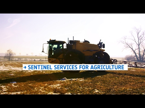 Sentinel services for agriculture