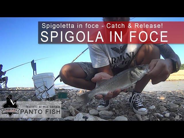 Spigoletta in foce con contorno di anguille