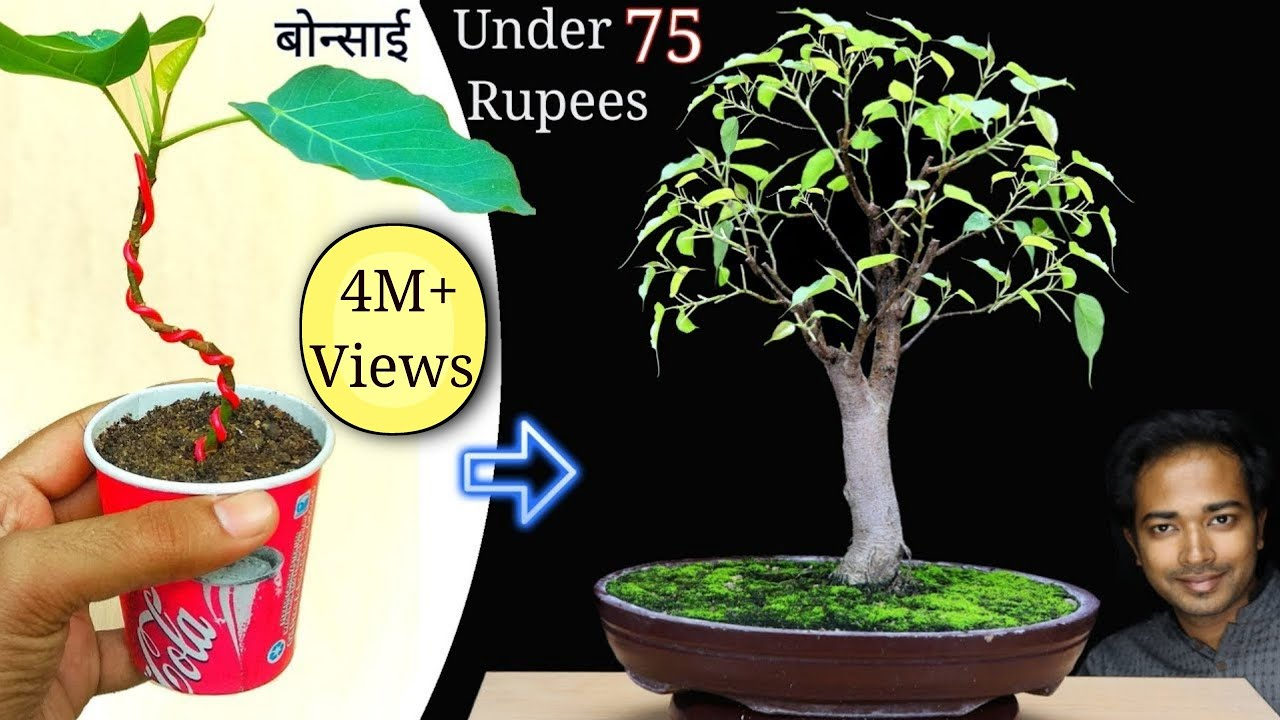 How To Make Bonsai Tree At Home Under 75 Rupees Easy But Best Bonsai For Beginners Youtube