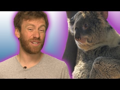 Koalas With Chlamydia | Earth Juice (Ep 24) | Earth Unplugged