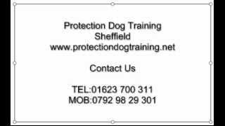 Protection Dog Training Sheffield