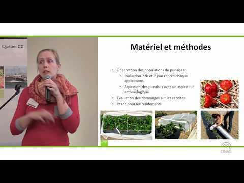 Produits biologiques pour le contrôle de la punaise terne et de la drosophile
