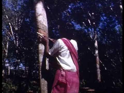Malaysia: Tanah Merah Rubber plantation 1952