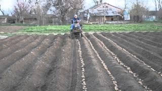 Мини трактор из мотоблока на посадке картофеля.