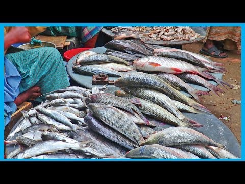 Exclusive Fresh Fish Market Near Me (Part 30) | Fish Corn