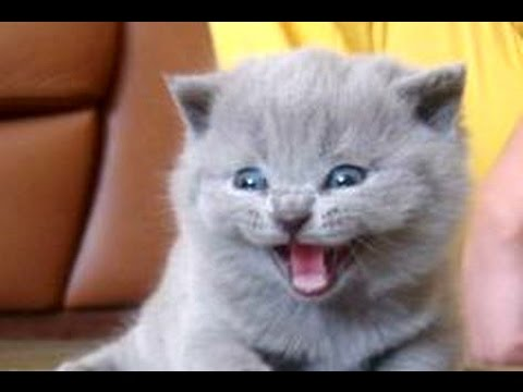 Kittens Meowing Compilation || CUTE