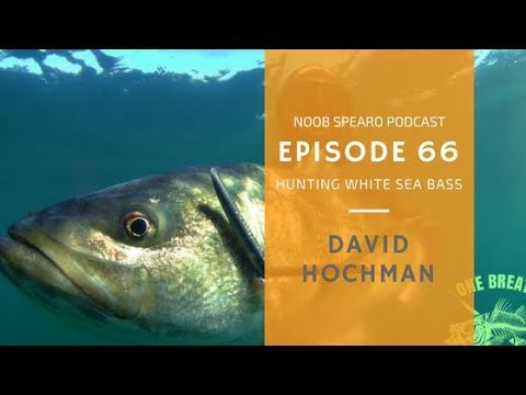NSP:066 David Hochman Targeting Striped Bass with Spear-it Charters