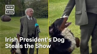 President of Ireland's Dog Steals the Show