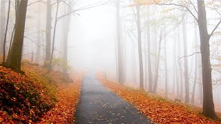 Early Autumn Mornings- Indie/Folk/Mellow Playlist, 2020