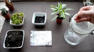 miniature garden in glass bowl