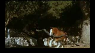 Budweiser - Fetch Super Bowl XLIII Commercial 209