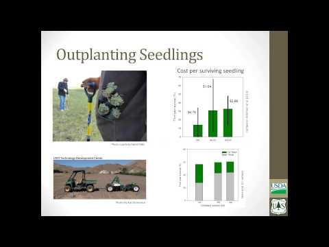The Science of Sagebrush Ecosystem Restoration