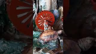 Cách chăm sóc và cho rùa ăn