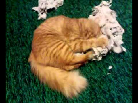 Кот и туалетная бумага прикол