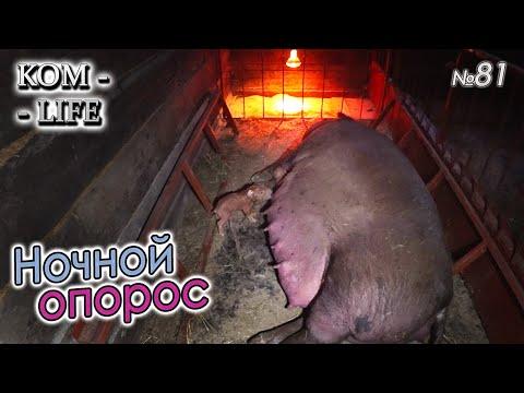 видео: ВТОРОЙ ОПОРОС  НОЧНОЙ НЕЗВАНЫЙ ГОСТЬ