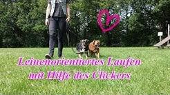 Leinenorientiertes Laufen mit Hilfe des Clickers trainieren! Hundetraining, Hundeschule.
