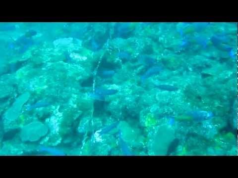 Dive of - Bianca C, Grenada