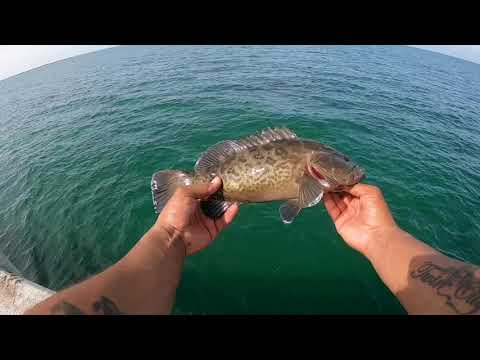Grouper And Snapper Fishing At The Skyway Fishing Pier In St Pete Florida