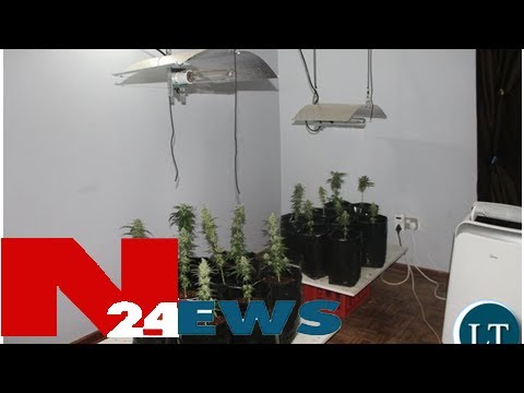Dec nabs lusaka man for running an indoor cannabis lab
