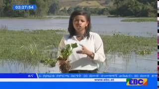 Latest Ethiopian News - EBC TV November 1