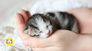 Cute Newborn Kittens And Baby Cat Videos Ever (2020)