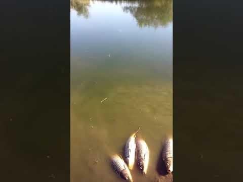 Pesca en el samborombon