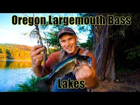 Bank Fishing For Largemouth Bass, Lake Selmac Oregon, Green Senko Worms. Oregon Lakes. Grants Pass
