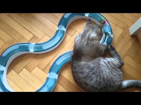 Mai loves Catit super roller circuit