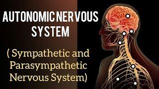 AUTONOMIC NERVOUS SYSTEM: Sympathetic and Parasympathetic