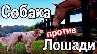 Собака против Лошади.