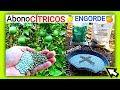 🍋🍊Abonado En Cítricos ✓Mejor Fertilizante Para Desarrollo Y Engorde De Naranjas Y Limones By Mixim89