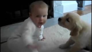 Labrador -Labrador puppy - Funny Babies have fun with Labrador Retriever