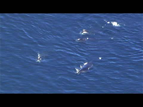 Web Extra: Whales Off Marshfield