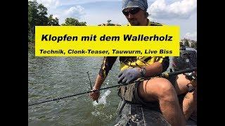 Waller-Workshop Teil 17 Klopfen / Wallerholz / Lockstoff / Clonk Teaser / Technik By Stefan Seuß