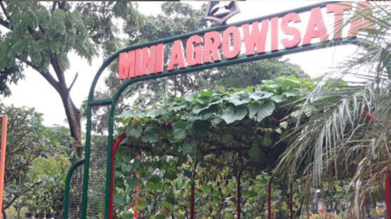 Mini Agrowisata Rekreasi Gratis Dan Edukatif Di Surabaya