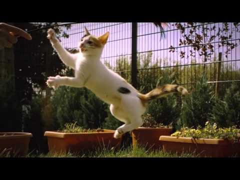 Epic Cat Music Video