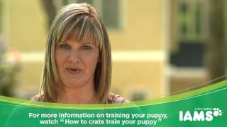How to House Train a Puppy: Iams Puppy Training