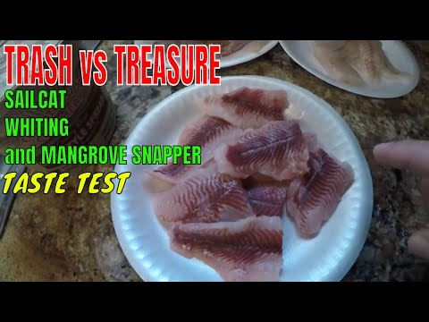 TRASH VS TREASURE.. GAFFTOP SAILCAT,WHITING And MANGROVE SNAPPER TASTE TEST