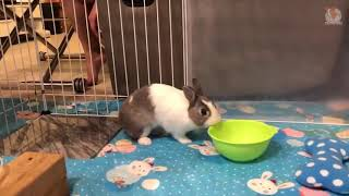 TRY NOT TO LAUGH #634  FUNNY ANIMAL TIKTOK VIDEOS COMPILATION