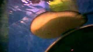 Sting Ray at Manila Ocean Park