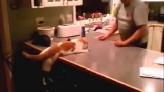 Как коты зажигают