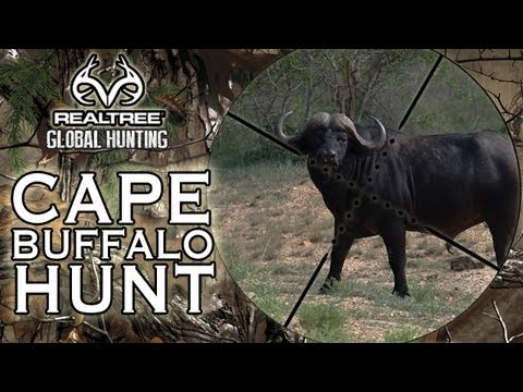 EXTREME HUNTING: Charging Cape Buffalo Hunt In Mozambique