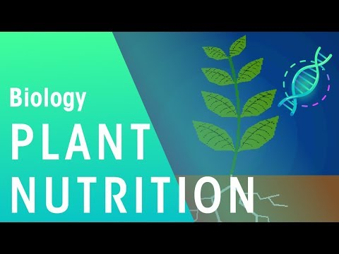 Plant Nutrition | Plants | Biology | FuseSchool
